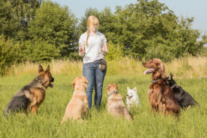 MEET THE NEEDS OF YOUR DOG MENTALLY AND PHSICALLY